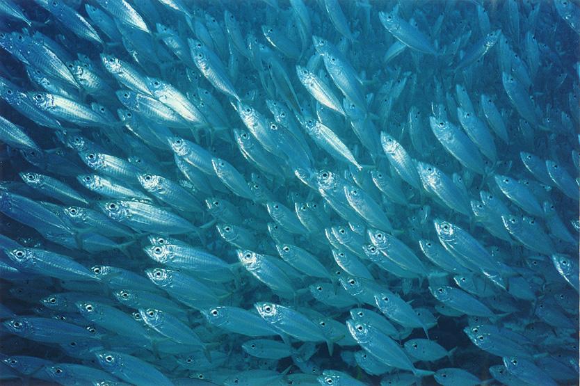 A sea of sameness screenwriting from iowa for Little fish swim school