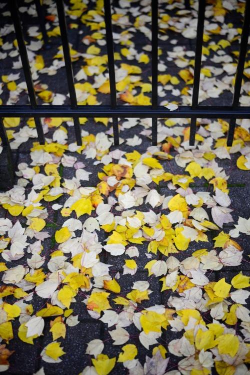 Fall in Franklin2