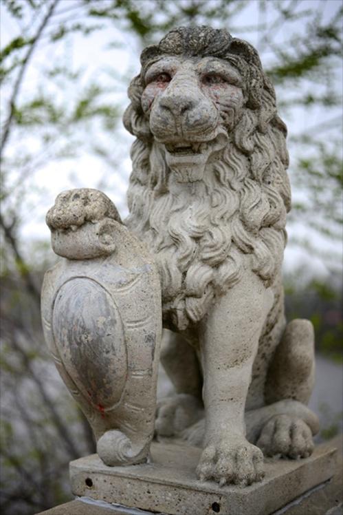 Lion-CR