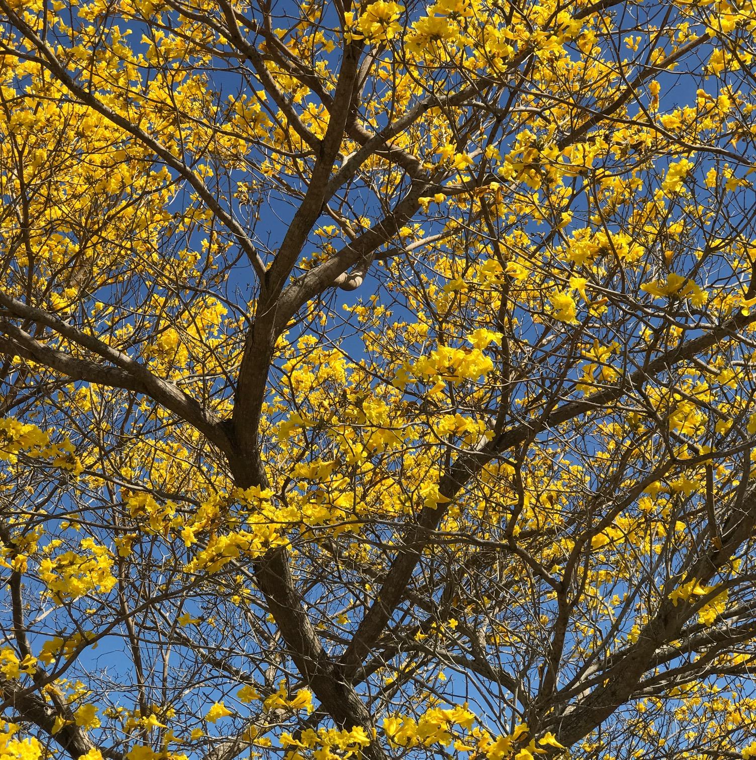 treeIMG_7988.JPG