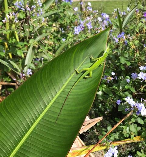lizard_1809.jpg